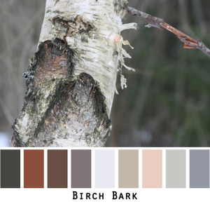 Birch Bark - shades of whites greys and tan to brown with the pink underside of birch bark colors for green eyes, brown eyes,  brunette, redhead, black hair, gray hair - photo by Inese Iris Liepina, Wrapture by Inese
