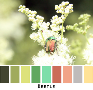 Color card made by Inese iris Liepina with a photograph of a beetle on meadowsweet for custom orders.