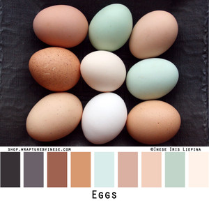 Eggs photographed by Inese Iris Liepina and made into a color card for custom ordering knitwear from Wrapture by Inese