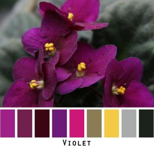 Violet - magenta violet fuchsia green gold gray black green eyes, brown eyes,  brunette, redhead, black hair, gray hair - photo by Inese Iris Liepina, Wrapture by Inese