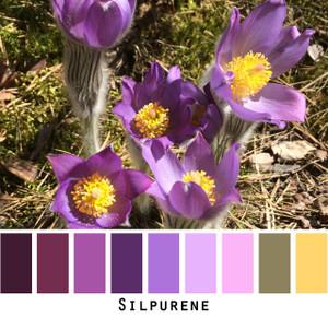 Silpurene - purple plum violet lavender sage gold green eyes, brown eyes,  brunette, redhead, black hair, gray hair - photo by Inese Iris Liepina, Wrapture by Inese