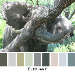 Elephant - blue grey sage gray ivory teal for blue eyes, green eyes, brown eyes, blonde hair, brunette, redhead, black hair, gray hair - photo by Inese Iris Liepina, Wrapture by Inese