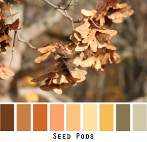 Seed pods yellow gold brown colors in a photo by Inese Iris Liepina made into a color card for custom ordering from Wrapture by Inese