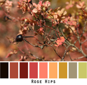 Rose Hips black pink rose peach olive green gold, colors in a photo by Inese Iris Liepina made into a color card for custom ordering from Wrapture by Inese
