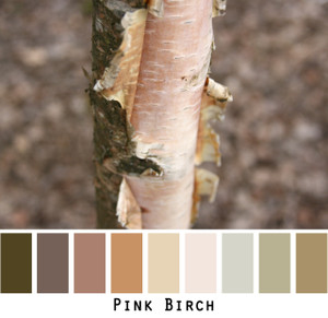 Pink Birch - soft warm taupes, mauves and pinks colors in a photo by Inese Iris Liepina made into a color card for custom ordering from Wrapture by Inese
