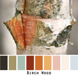 Birch Wood - rust, charcoal, olive, pink, lichen blue, warm white colors in a photo by Inese Iris Liepina made into a color card for custom ordering from Wrapture by Inese