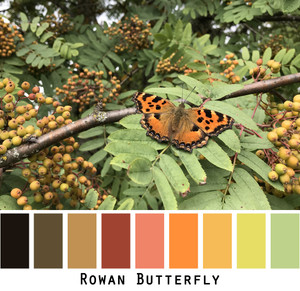 Rowan Butterfly - orange rust brown black gold olive- photo by Inese Iris Liepina in a color card for custom ordering from Wrapture by Inese
