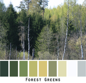 Forest Greens photograph of every shade of green fir and birch forest made into a color card for custom ordering knits from Inese Iris Liepina. Colors include green, olive, forest green, chartreuse, sage.