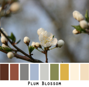 Plum blossom picture with colors from the photograph made into a color card in shades of brown, olive green, ivory, gold blue that can be used to custom order knitwear.