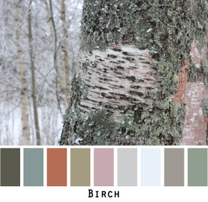 Birch tree bark in winter photographed closeup made into a color card with shades of rust, grey, charcoal, sage, mauve, lichen.  Inspiration for Ineses custom knit paintings.