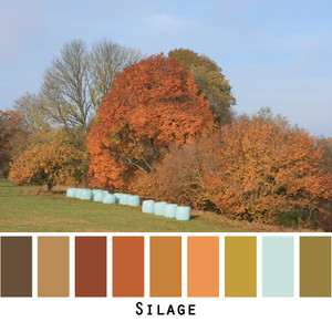 Photograph of silage and autumn leaves on trees by Inese Iris Liepina made into a color card for custom ordering from Wrapture by Inese.