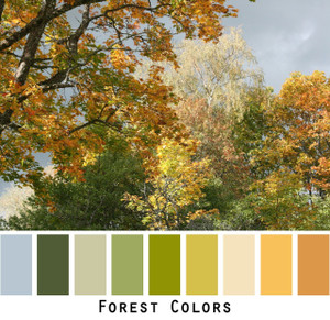 Forest colors trees in a photograph by Inese Iris Liepina made into a color card for custom ordering from Wrapture by Inese