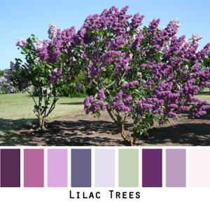 Lilac Trees - lavender plum lilac seafoam green  colors for blue eyes, green eyes, brown eyes, blonde hair, black hair, gray hair - photo by Inese Iris Liepina, Wrapture by Inese