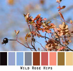 Wild Rose Hips blue sky black rust mauve olive gold photograph by Inese Iris Liepina