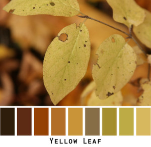 Yellow Leaf black brown gold yellow green colors in a photo by Inese Iris Liepina made into a color card for custom ordering from Wrapture by Inese