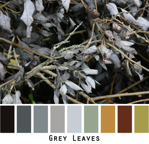 Dried Grey Leaves Photographed by Inese Iris Liepina to show all the shades of grey, black, silver, rust, ocher, sage in a color card to be used to custom order Ineses knitwear.