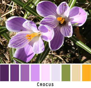 Crocus flowers photographed by Inese Iris Liepina and made into a color card for custom ordering knitwear from Wrapture by Inese