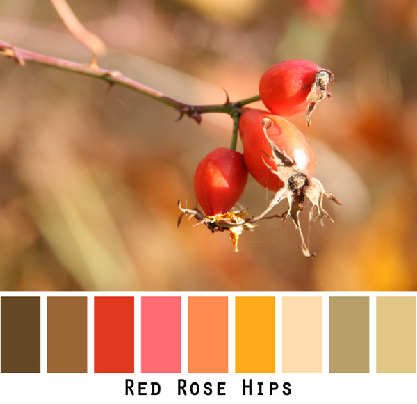 Red Rose Hips red brown gold colors in a photo by Inese Iris Liepina made into a color card for custom ordering from Wrapture by Inese