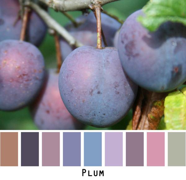 Plum - purple violet plum raisin mauve - photo by Inese Iris Liepina, Wrapture by Inese