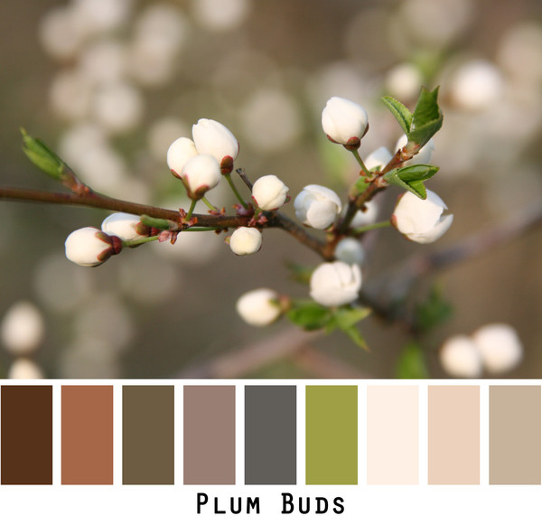 Plum Buds in shades of brown, olive green, ivory and beige that are made into a color card for custom ordering. Photo by Inese Iris Liepina