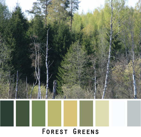 Forest Greens photograph by Inese Iris Liepina made into a color card for custom ordering from Wrapture by Inese