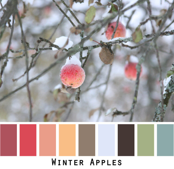 Winter Apples color card made from photograph by Inese Iris Liepina for custom orders from Wrapture by Inese
