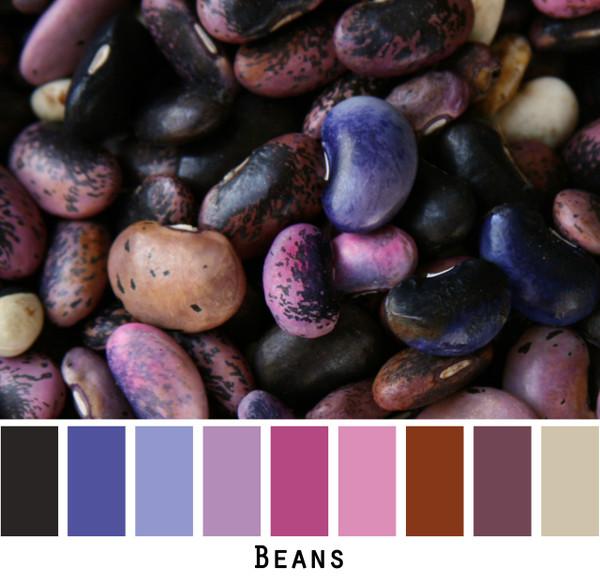 Beans color card, Photo Inese Iris Liepina