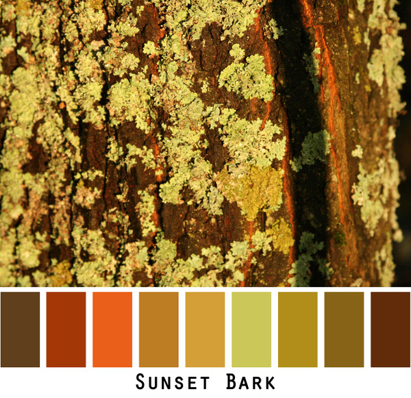 Sunset Bark - warm sunset glow red orange rusty brown chocolate gold olive green lime  chartreuse colors for green eyes, brown eyes, brunette, redhead, black hair - photo by Inese Iris Liepina, Wrapture by Inese