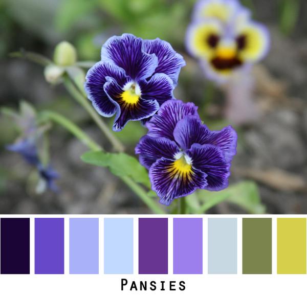 Pansies - lavender purple sky blue green colors for blue eyes,  brown eyes, blonde hair,  black hair, gray hair - photo by Inese Iris Liepina, Wrapture by Inese