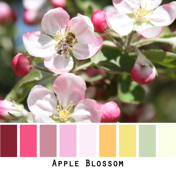 Apple Blossom - pink red yellow sage green- photo by Inese Iris Liepina, Wrapture by Inese