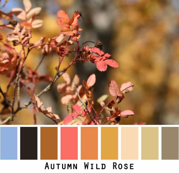Autumn Wild Rose coral red orange pumpkin sky blue black olive gold photograph by Inese Iris Liepina