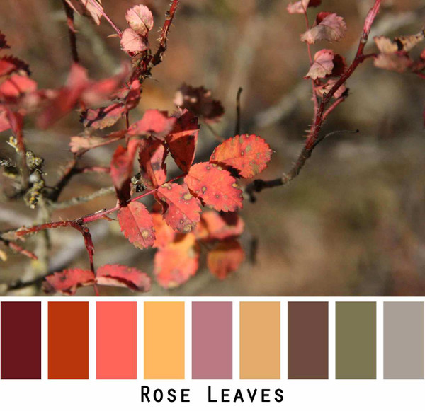 Color inspiration in rose leaves with dark wine red mango yellow gold mauve olive grey brown color pallette that was photographed by Inese iris Liepina.
