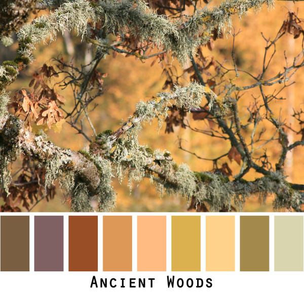 Ancient Woods brown gold lichen mustard paprika colors in a photo by Inese Iris Liepina made into a color card for custom ordering from Wrapture by Inese