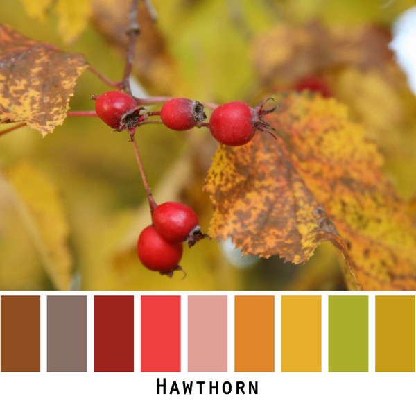 Hawthorn brown red gold green photo Inese Iris Liepina