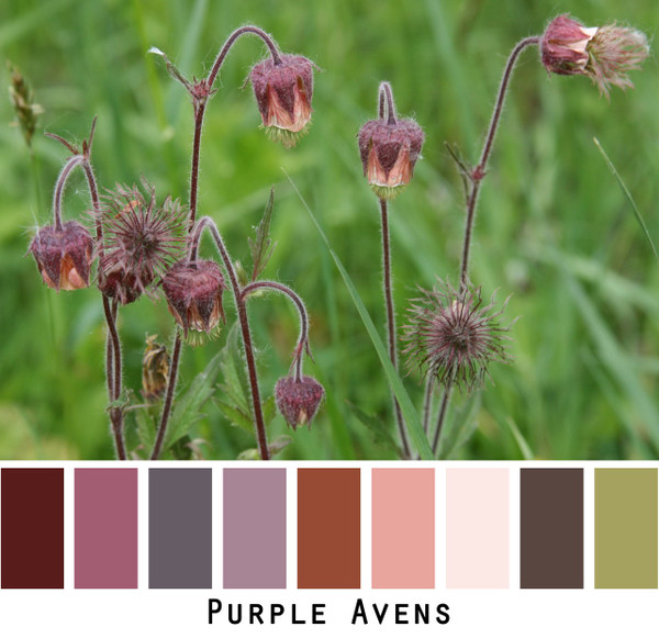 Purple Avens photo color card for custom orders | Wrapture by Inese