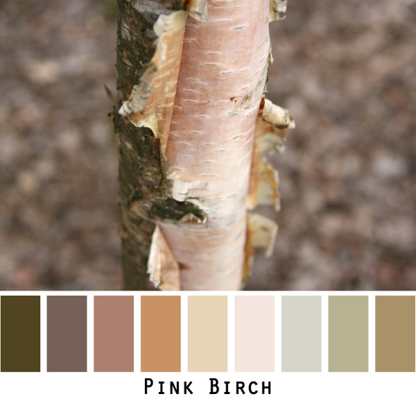 Pink Birch - soft warm taupes, mauves and pinks Photograph by Inese Iris Liepina
