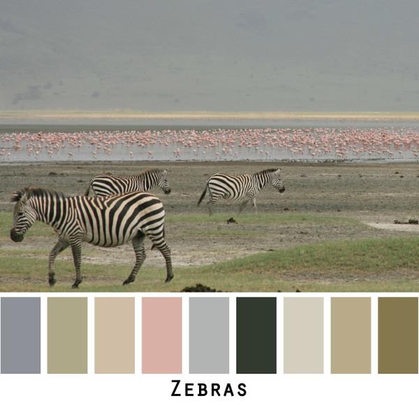 Zebras foto by Inese Iris Liepina