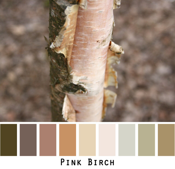 Pink Birch bark rust ochre gold brown sage- photo by Inese Iris Liepina in a color card for custom ordering from Wrapture by Inese