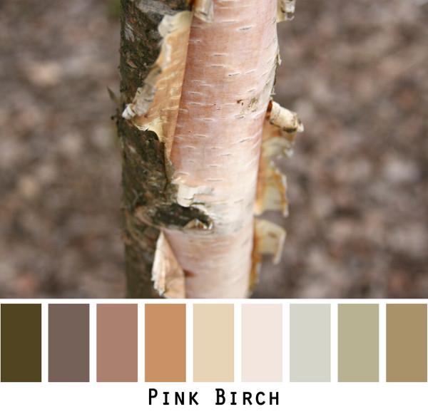 Pink Birch Photo by Inese Īris Liepiņa