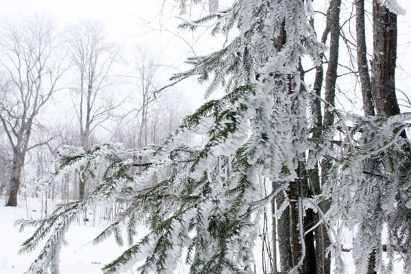 snow, foto by Inese Īris Liepiņa
