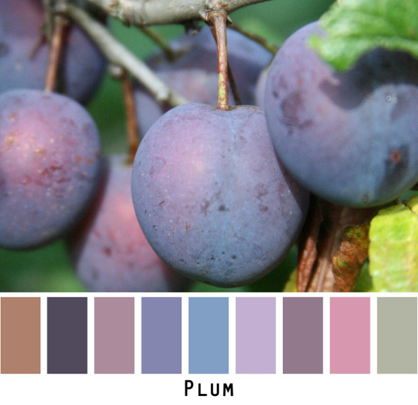 Inese Iris Liepina photograph of plums made into a color card for custom orders knitwear from Wrapture by Inese