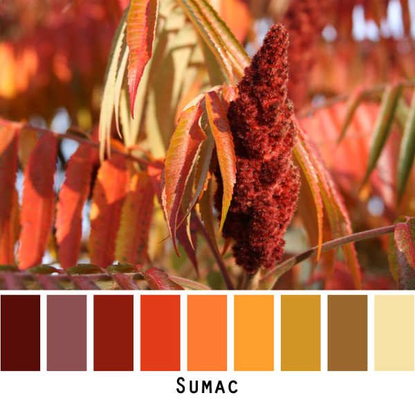 Sumac photograph made into a color card for custom orders photographed by Inese Iris Liepina