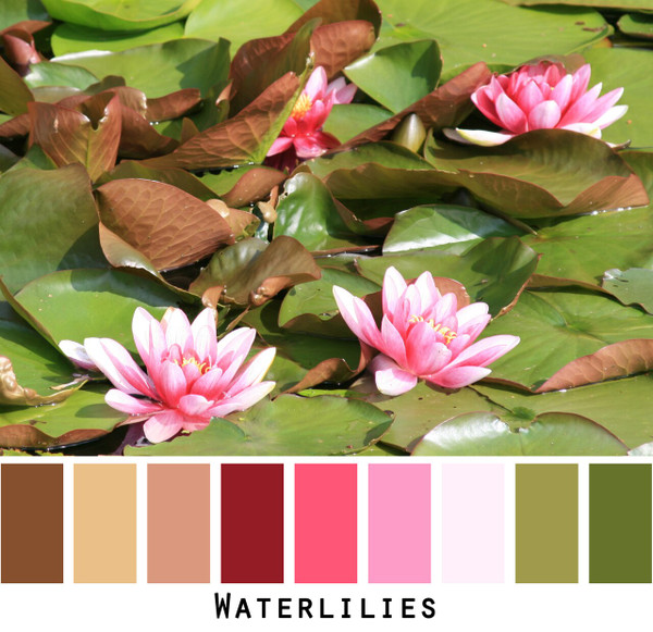Waterlilies photographed by Inese Iris Liepina and made into a color card for custom ordering from Wrapture by Inese