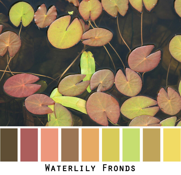 Waterlily Fronds photographed by Inese Iris Liepina and made into a color card for custom ordering from Wrapture by Inese