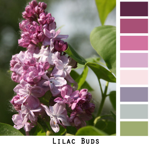 Lilac buds photographed by Inese iris Liepina and made into a color card for custom ordering Wrapture by Inese knitwear.