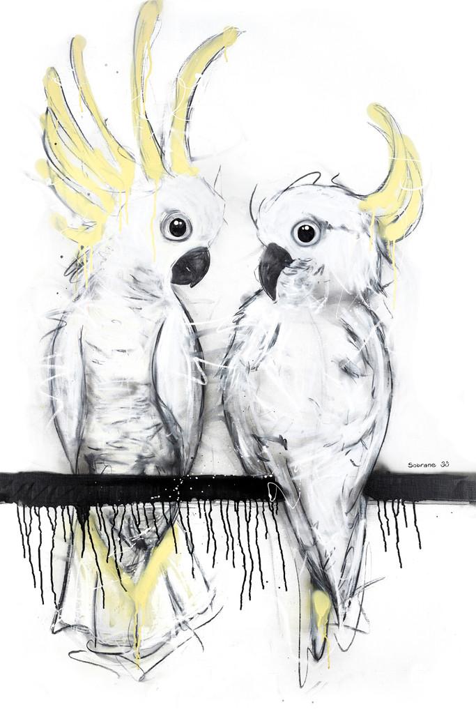 Sulphur Crested Cockatoo Duo