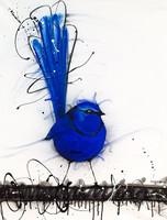 Splendid Blue Wren on Canvas. Sobrane Original
