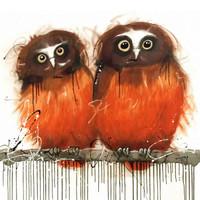 Saw Whet Owls
