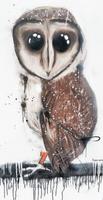 Sooty Owl Card