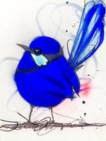 Cute Splendid Blue Wren